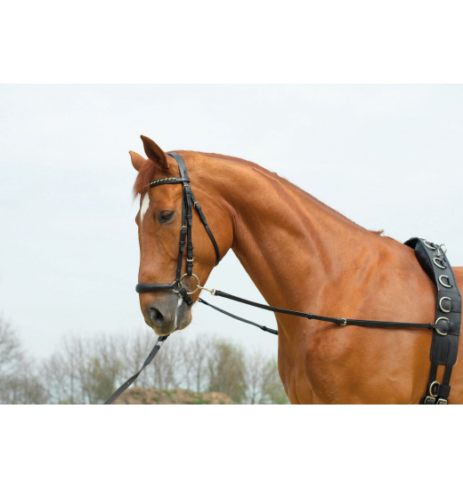 SIDE REINS BASIC-STARR - 1 in category: trainig aids for horse riding