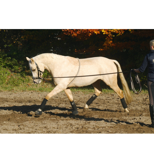 Busse LUNGE SUPPORT COTTON