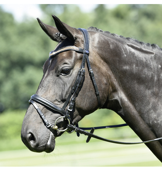 Busse BRIDLE GLORY