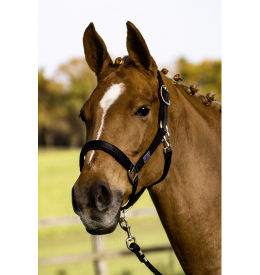 Busse BUSSE HEADCOLLAR SOLID SOFT
