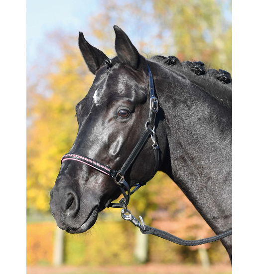 Busse BUSSE HEADCOLLAR COLOUR-WAVE, LEATHER