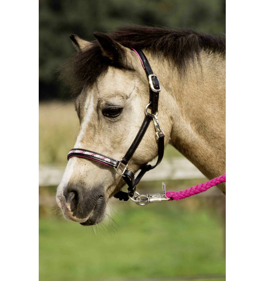 Busse BUSSE HEADCOLLAR NOBILITY, LEATHER