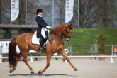 RIDER'S SEAT. SEATED TROT - TIPS
