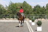 DRESSAGE TRAINING - SHOULDER BLADE