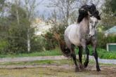 Equine coat colours