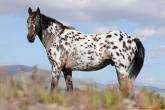 15 ras koni, które powinieneś znać