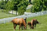 10 summer commandments for horse riders