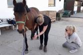 Wywiad z Anną Bajko - osteopatką specjalizującą się w pomaganiu koniom