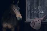 How to choose a saddle for your horse? Saddle compendium
