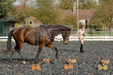 Cavaletti – working on a lunge