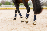 Boots for horses - why to use them, how to put them on and fit them?