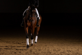Top 5 products for protection of your horse's legs