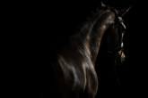 4 habits of a good rider - do you know them?