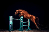 Veredus horse boots admitted to use by FEI!