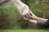 Injuries and affliction of hooves - disturbing symptoms, causes and treatment