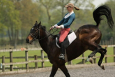 Horse vices - causes and combating