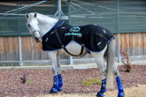 Magnetotherapy for horses. Magnetic rugs, magnetic boots