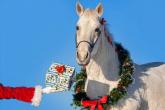EQUESTRIAN EQUIPMENT FOR CHRISTMAS 2020