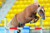 Equestrian Guinness records