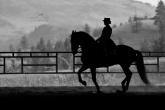 Psychology - still underestimated in horse riding