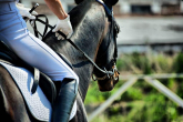 12 traits and skills of a good rider
